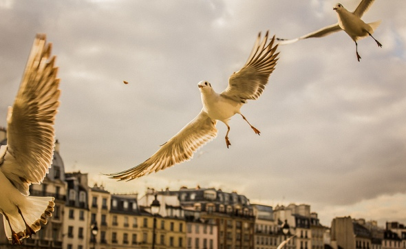Seagulls_00