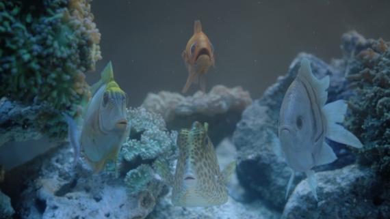 trident_peixes_00