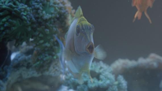trident_peixes_02
